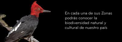 """Biogeografía de Chile - Actividad a Realizar (4° MEDIO """"D"""")"""